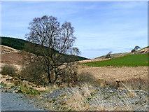 SN8056 : The Tywi valley near Nant-ystalwyn, Ceredigion by Roger  Kidd