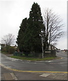 ST3090 : Evergreen trees and deciduous trees, Malpas, Newport by Jaggery