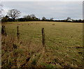ST4187 : Sheep grazing in a field near Magor, Monmouthshire by Jaggery