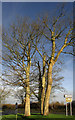 SW9973 : Trees on Sports Centre roundabout by Derek Harper