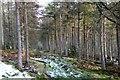 NT3535 : Forest ride, Plora Craig by Jim Barton