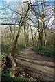 TQ3870 : Woodland Path in Beckenham Place Park by Glyn Baker