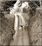 TQ1352 : Dogs down the lane by Des Blenkinsopp