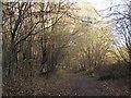 SE3231 : Path through the woods near Thwaite Mills  by Stephen Craven