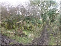 SX7282 : Junction of paths, near Langdon by David Smith