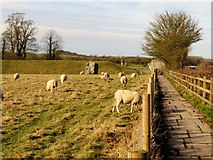 SU1070 : Path to the stone circle by Steve Daniels