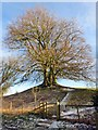 SU1070 : Trees on the earthworks at Avebury by Steve Daniels