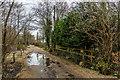 TG3117 : Beech Road by Ian Capper