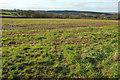 SX0770 : Field near Helland by Derek Harper