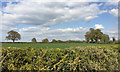 SP3067 : Fields and hedgerow trees north of Milverton by Robin Stott
