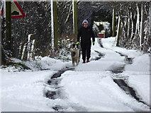 H5173 : Walking the dog, Killycurragh by Kenneth  Allen
