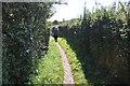 SX0349 : South West Coast Path by N Chadwick