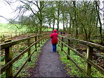 H5776 : Path, Loughmacrory Lough by Kenneth  Allen