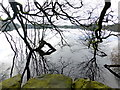 H5776 : Tree reflections, Loughmacrory Lough by Kenneth  Allen