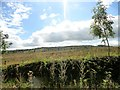 NZ1850 : Looking across the heath by Robert Graham