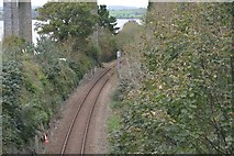 SX4358 : Tamar Valley Line by N Chadwick