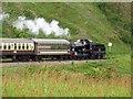 SX8958 : A steam train heading to Paignton by Steve Daniels