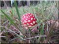 SO1053 : Emerging through the grass by Bill Nicholls