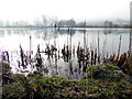H3576 : Bulrushes, Claraghmore Lough by Kenneth  Allen