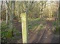 ST6667 : Hurn field by Neil Owen