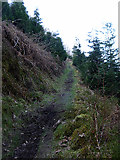 SN7377 : Path up to the railway by John Lucas
