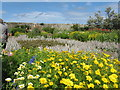 NU1341 : Gertrude Jekyll Garden, Lindisfarne by M J Richardson