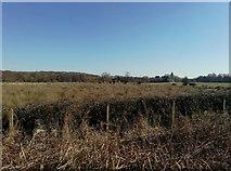 TQ0357 : Floodplains North of Newark Priory by James Emmans