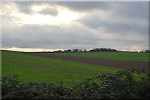 TL5053 : Farmland by N Chadwick