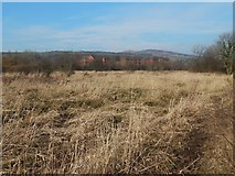 NS3977 : Marshy ground by the River Leven by Lairich Rig