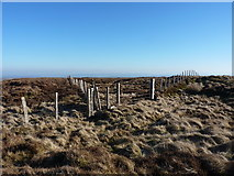 SJ0830 : Fence junction at the summit of Moel Poethion by Richard Law