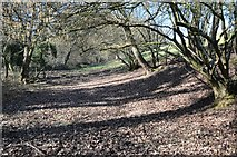 SO6756 : Path above Blews Ditch by Philip Halling