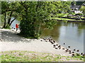 NY4624 : Ducks on the river bank by Rob Purvis