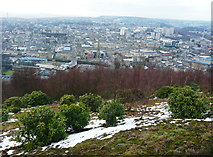 SE1025 : Rhododendrons and birch trees on Beacon Hill, Halifax by Humphrey Bolton