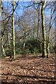 SU9098 : Langleys Wood by Des Blenkinsopp