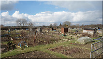 SU8997 : Allotments, Beech Tree Rd, Holmer Green by Des Blenkinsopp