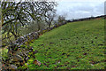 SK1255 : Dry stone wall, top of Harry's Bank by Mick Garratt