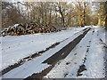 TR1841 : Pile of logs, Acrise Wood by John Baker