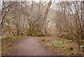NH5129 : Path in Urquhart Bay Woods by Craig Wallace