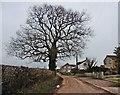 ST5243 : Haymoor Lane by Roger Cornfoot