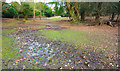 SU2808 : Soggy Path at Emery Down by Des Blenkinsopp