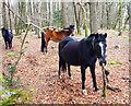 SU2606 : Ponies in the Trees by Des Blenkinsopp