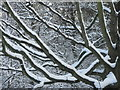 NT2470 : Snow on Sycamore by M J Richardson