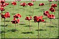 SO5039 : Poppies at Hereford Cathedral by Philip Halling
