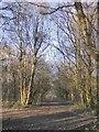 TQ1952 : Woodland near Batchelor's Rough, Headley Heath by Stefan Czapski