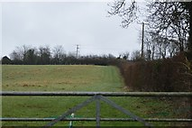 SY0088 : Field by Bond's Lane by N Chadwick