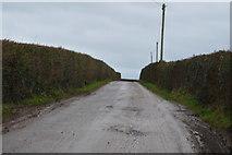SX9988 : A Devon lane by N Chadwick