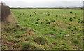 SW9774 : Field by the B3314 by Derek Harper