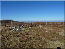 SJ0833 : Fence corner on Tomle's summit by Richard Law