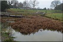 TQ5940 : Wetlands, Grosvenor Park by N Chadwick