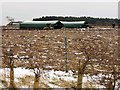 TF7731 : Pig farming near Great Bircham in Norfolk by Richard Humphrey